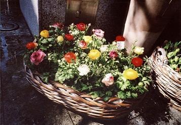 flower-natura