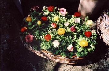 flower-ricoh