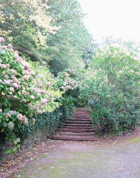 Dunster Castle の裏庭にて